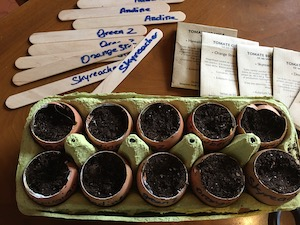 Semis dans coquilles d'oeufs